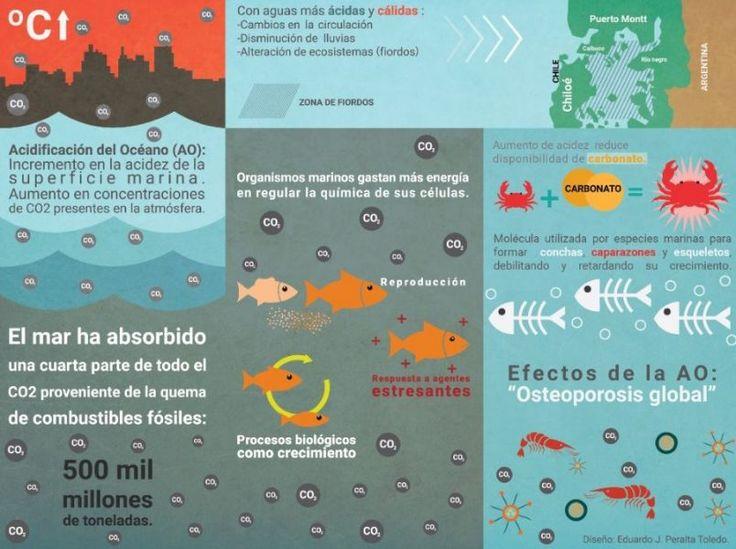 Acidificación De Los Mares Acidificación Del Océano Oceano Ecosistemas