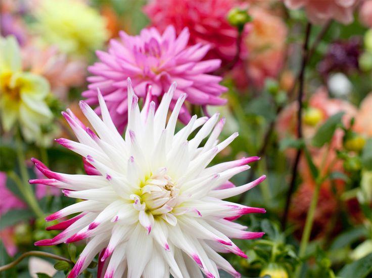 iBulb, persinformatie en gratis stockbeeld van bloem-bollen, bolbloemen en bollen op pot