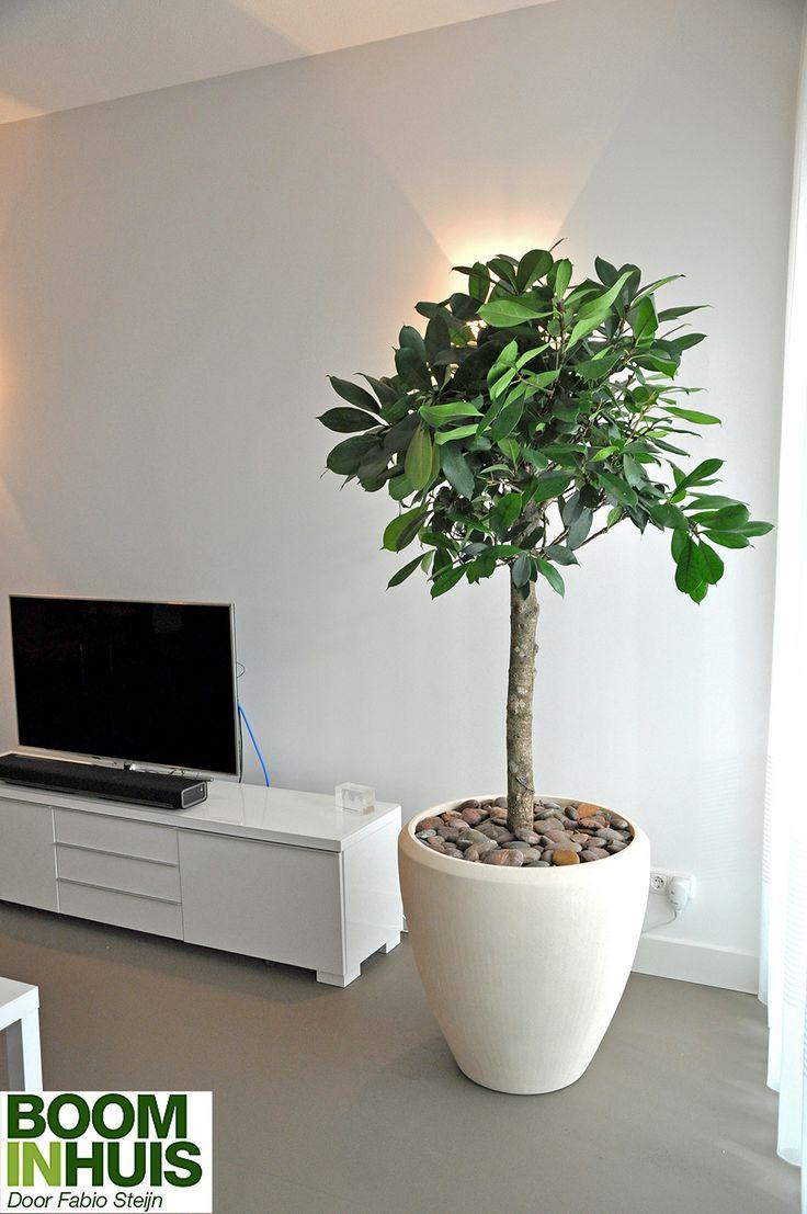 Het portfolio van Boom in Huis - Fabio Steijn. Projecten met bomen, grote planten en kamerplanten in originele plantenbakken. Huizen, kantoren, restaurants.