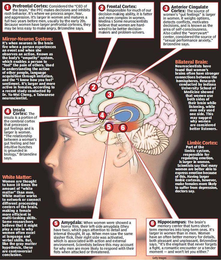 Prefrontal Cortex, Frontal Cortex, Anterior Cingulate Cortex, Insula Cortex, Amygdala, Hippocampus
