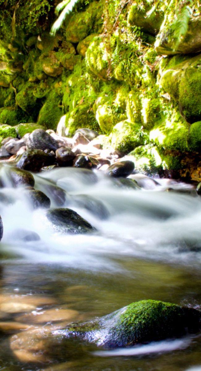 A stream on the side of Mt Pirongia
