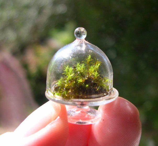 Teeny Tiny Terrarium! Love teeny tiny things & terrariums! Perfect!