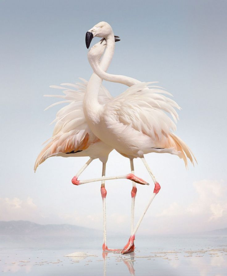 simen-johan-animal-photography-6