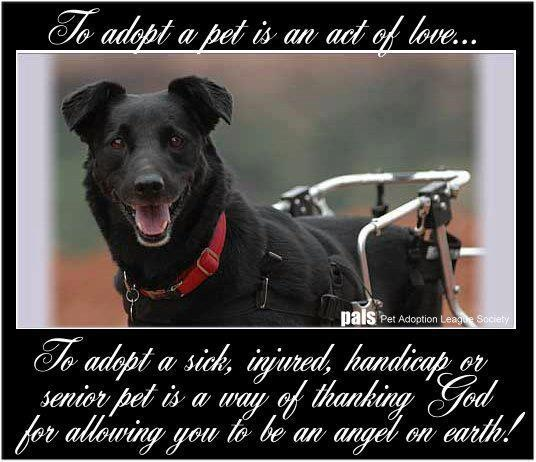 Dog Angel Quotes: 58 Best Images About Pet Quotes On Pinterest