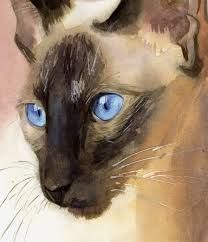 Image result for siamese cats paintings