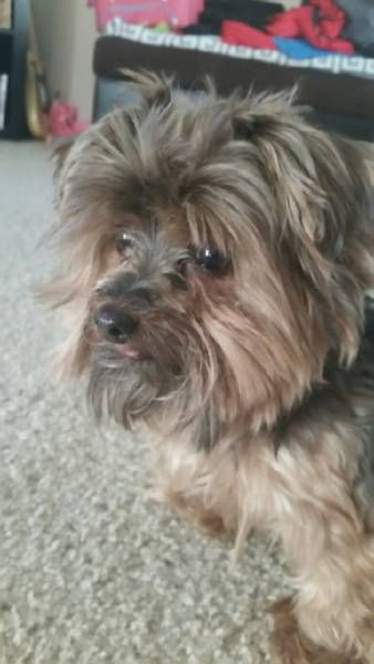 LOST DOG: 07/03/2017 - Paradise, Nevada, NV, United States. Ref#: L32538 - #CritterAlert #LostPet #LostDog #MissingDog