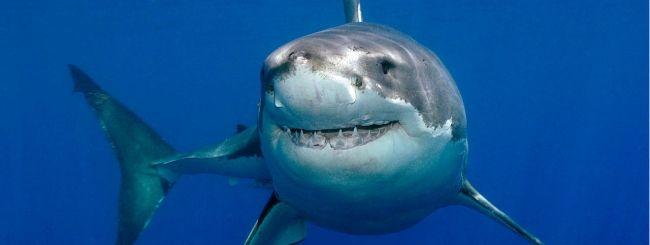 Droni, in Australia per difendersi dagli squali