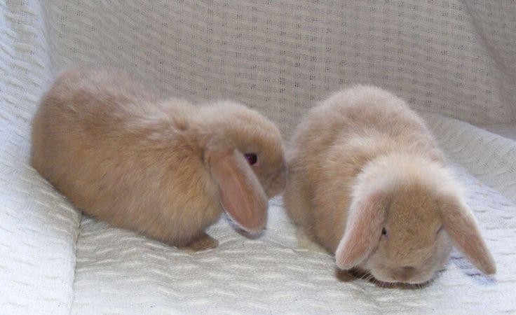 Best 10 Rabbit Breeds As Pets For Children Pets