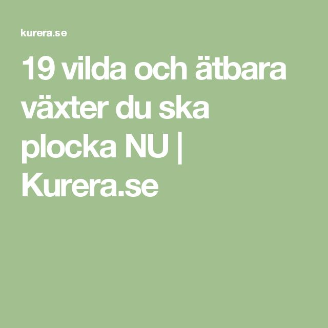 19 vilda och ätbara växter du ska plocka NU | Kurera.se