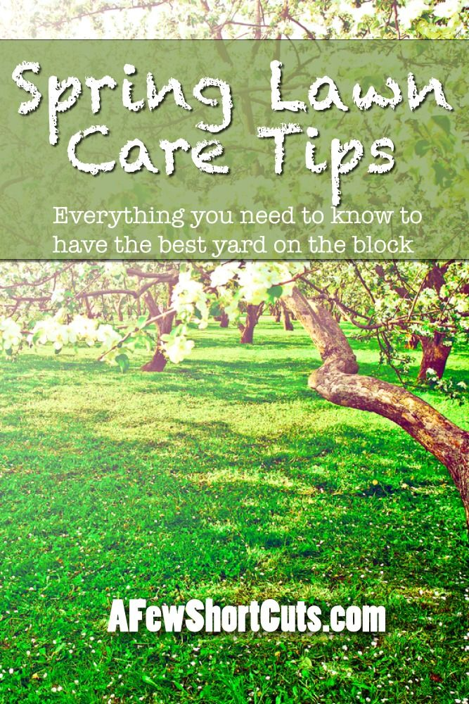 17 Best ideas about Lawn Care on Pinterest   Diy landscaping ideas ...