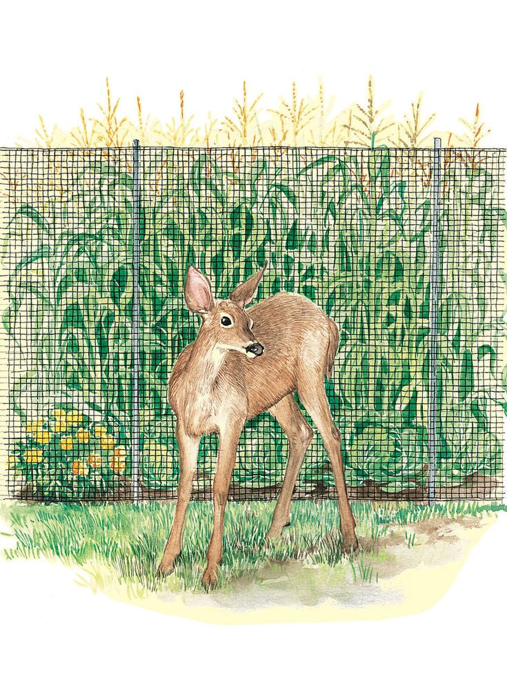 Deer Fence, Deer Fencing, Deer Netting | Gardeners.com 100 ft of 7' high deer fence $99