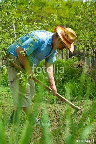 """Download the royalty-free photo """"Peasant digging in the garden"""" created by Gabriel Blaj at the lowest price on Fotolia.com. Browse our cheap image bank online to find the perfect stock photo for your marketing projects!"""