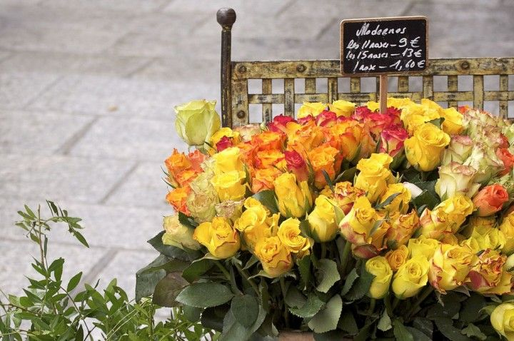 Flowers For Sale, Beautiful