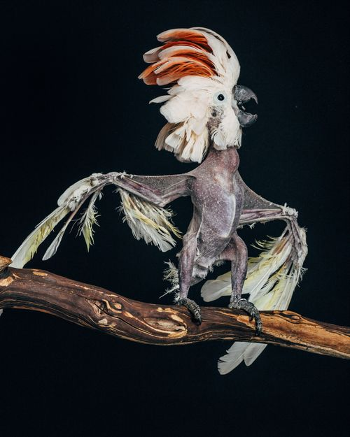 """In his evocative """"Earthbound"""" series, photographer Oliver Regueiro pulls back the curtain on what it means to own an exotic bird — warts and all:"""