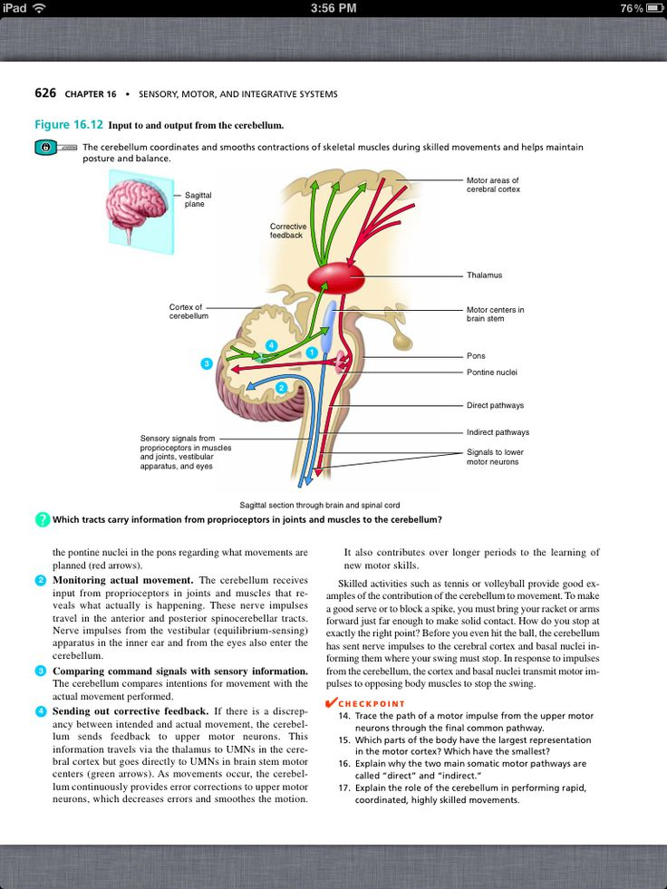 Principles Of anatomy and physiology checkpoint Answer
