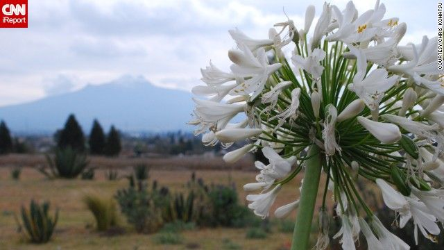 A bundle of white flowers blooms in the state '>Tlaxcala, Mexico with the inactive La Malinche volcano looming in the background.