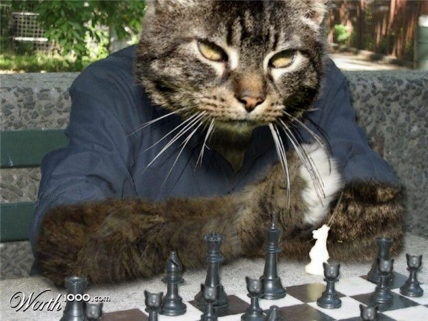 350 best images about chess photography on pinterest game of plays and marcel duchamp - Hello kitty chess set ...