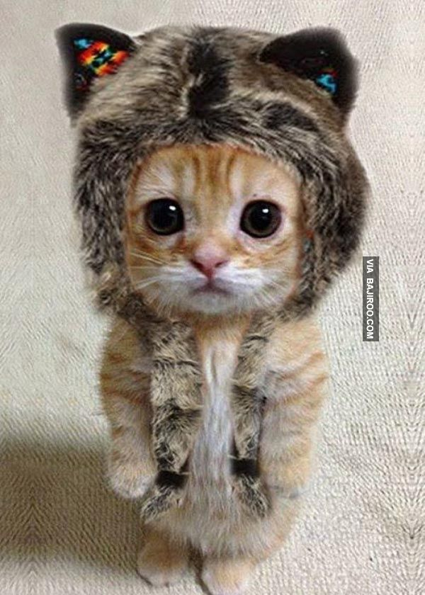 This little kitty is so cute !!!