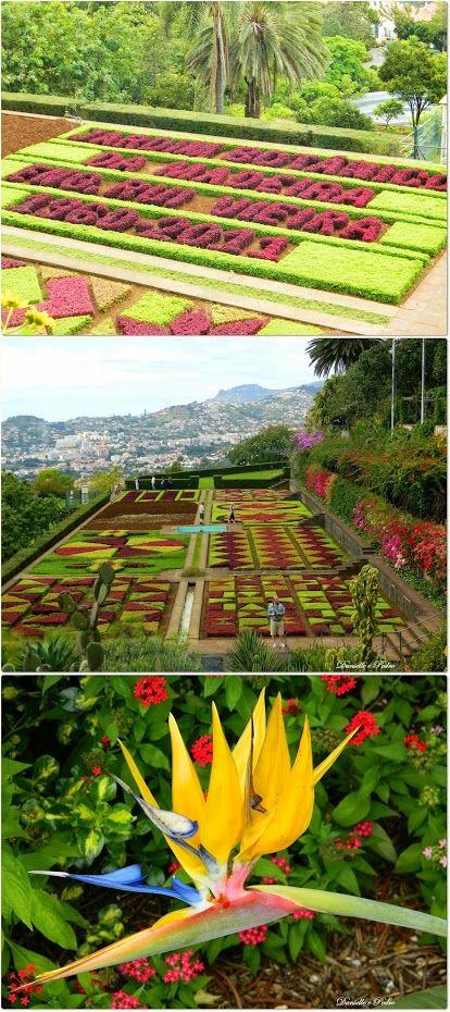 Garden - Jardim Botânico da Madeira - Madeira Island, Portugal #PortugalFlowerPower