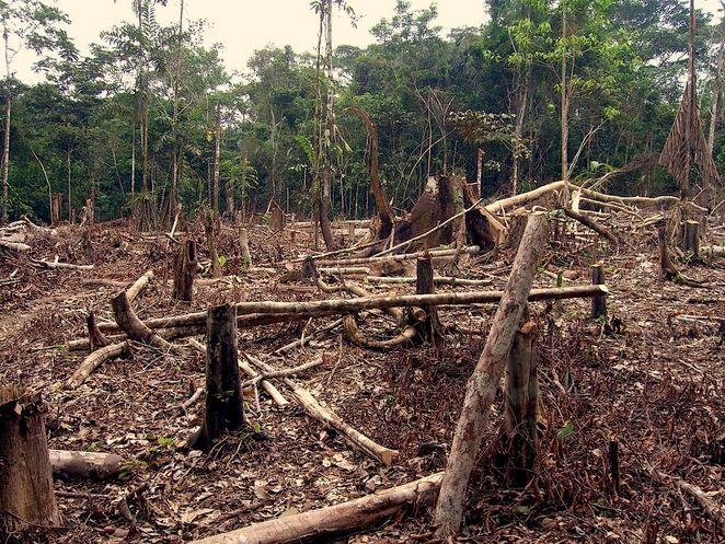 La déforestation de la planète se poursuit mais à un rythme ralenti