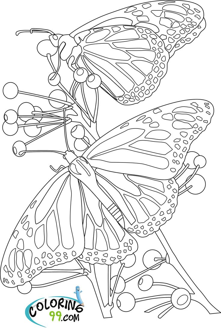 Stained glass butterfly coloring pages - Butterfly With Flowers Coloring Pages You Have Read This Article Animal With The Title Butterfly