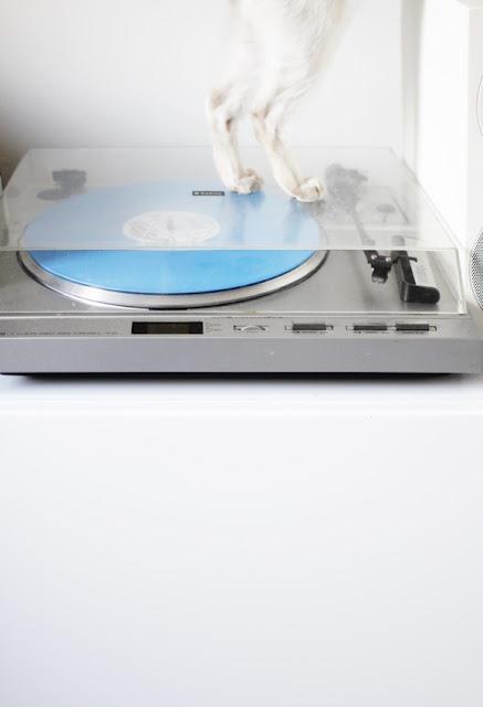 katti ja sininen levy