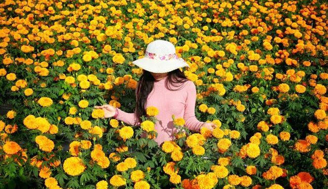 Gambar Bunga Indah Sekali 5 Tempat Wisata Indah Ini Berawal Dari Kebetulan Traveling Yuk 12 Gambar Bunga Aster Yang Menakjubkan Shadow Pictures Trip Fields