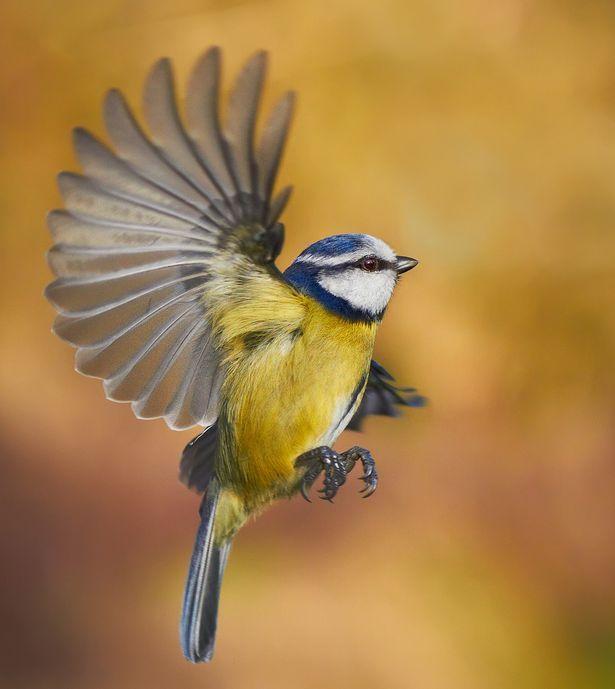 Die zehn besten britischen Vögel schafften es bis zum Finale der nationalen Vogelkampagne