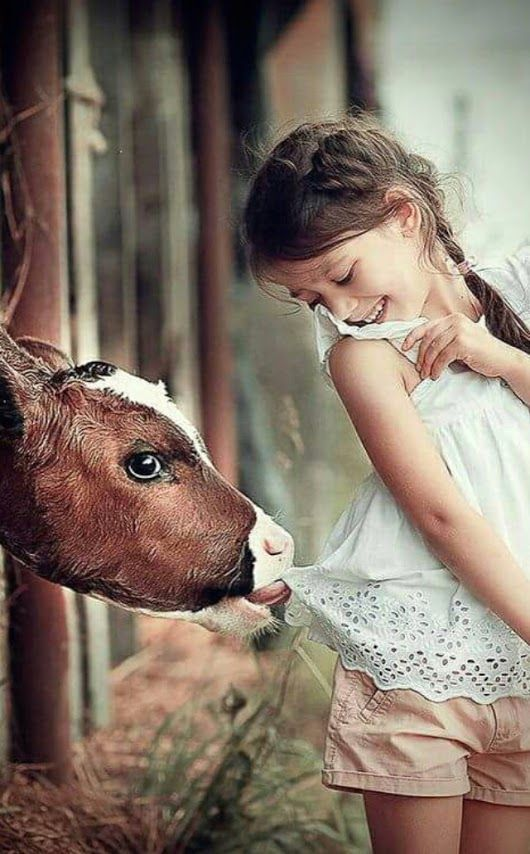 Calf w/ little girl--- Udderly adorable!
