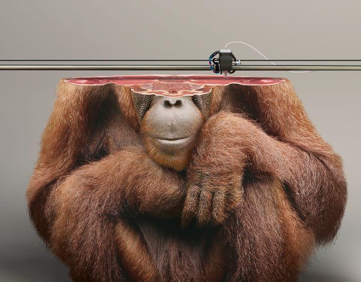 Estas Impressões 3D De Animais Em Extinção Servem Para Nos Alertar Enquanto É Tempo