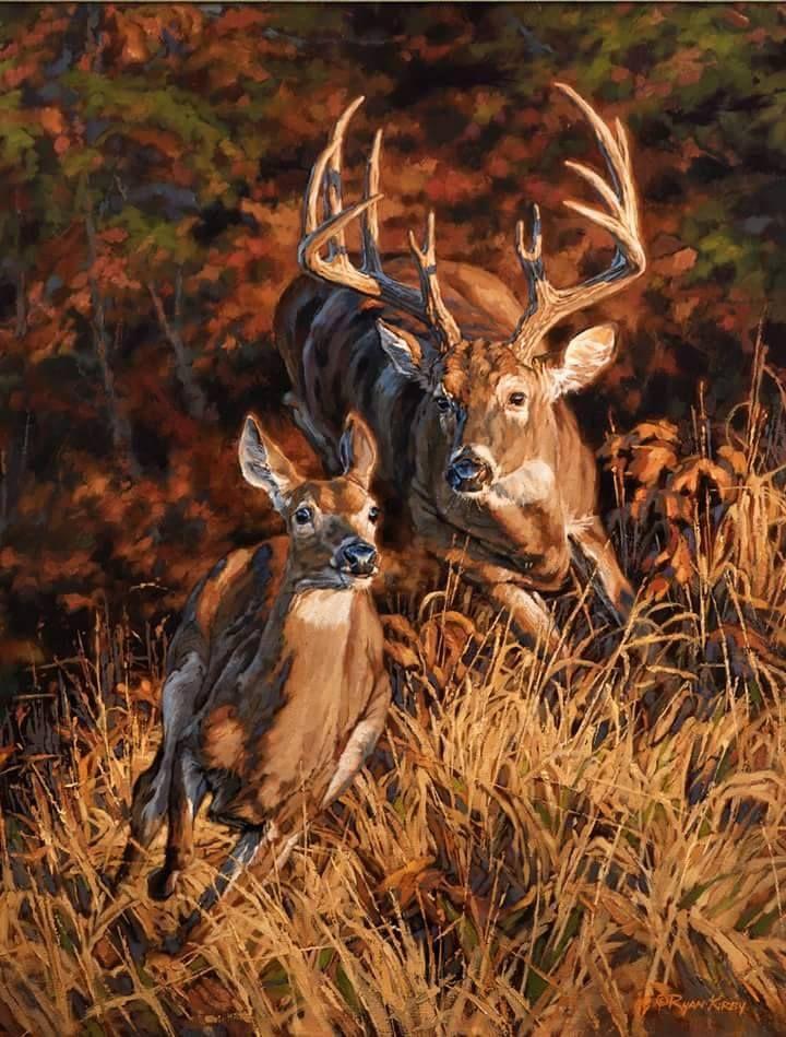 Mejores 7 imágenes de DEER en Pinterest | Pinturas de animales ...