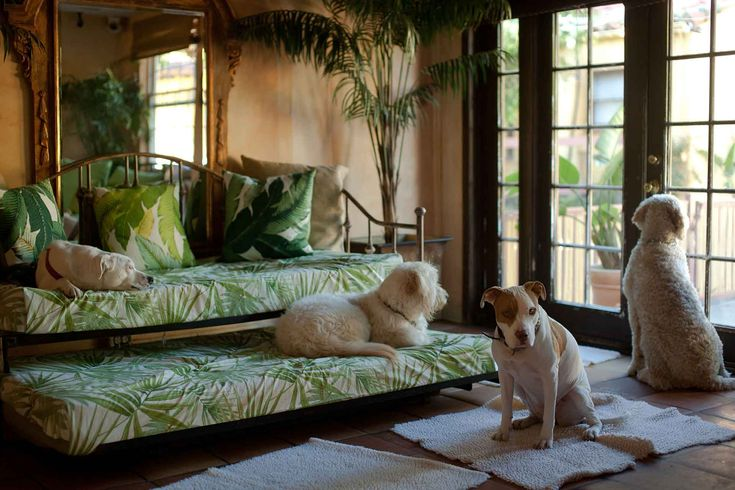 106 best my dog hotel images on pinterest animales cute for Best dog boarding los angeles