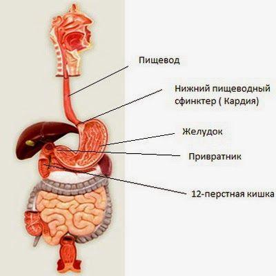 Кислотность желудка - изжога (400x400, 28Kb)
