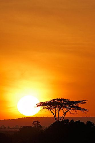 Sweetwater, Kenya, Africa    Totally makes me think of the Circle of Life.