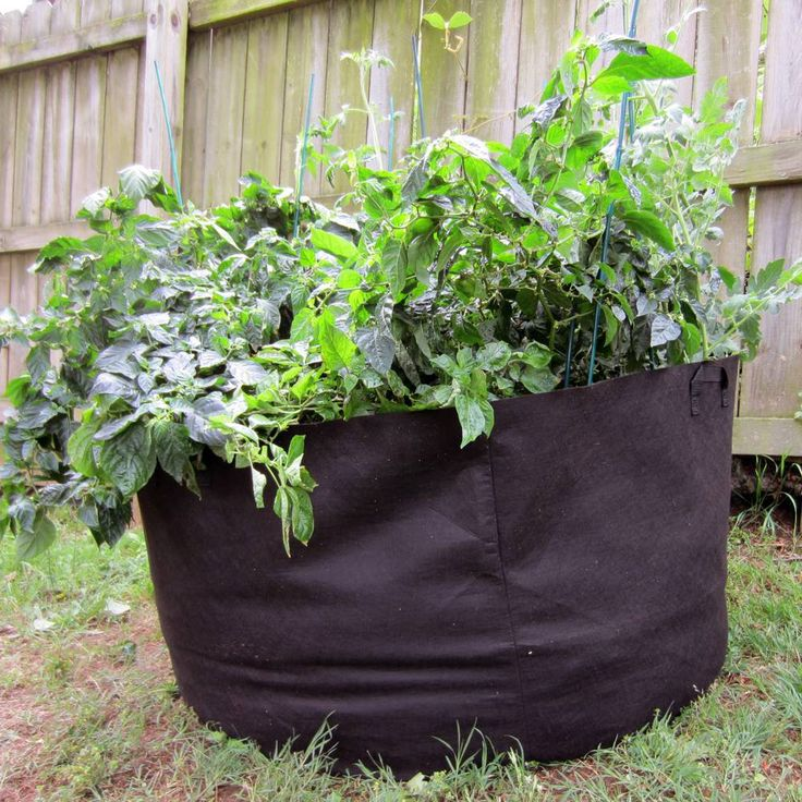 Home Design Ideas. garden in a bag sunflower. raised herb garden ...