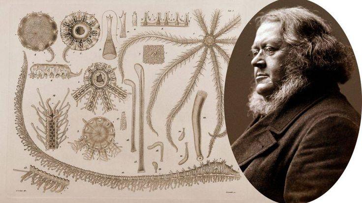 Som naturforsker gjorde han sin største oppdagelse med sjøstjernen Brisinga i 1853