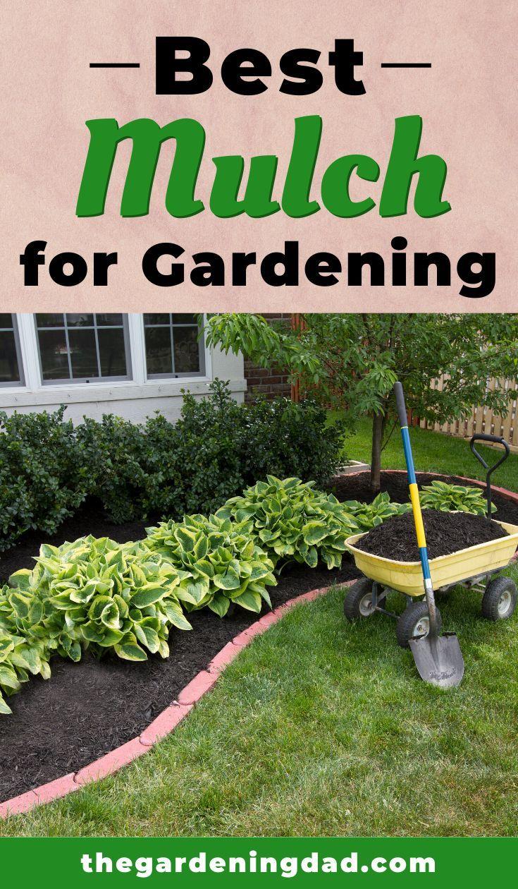 10 Best Mulch For Gardening 2020 The Gardening Dad In 2020 Best Mulch For Garden Vegetable Garden For Beginners Gardening For Beginners