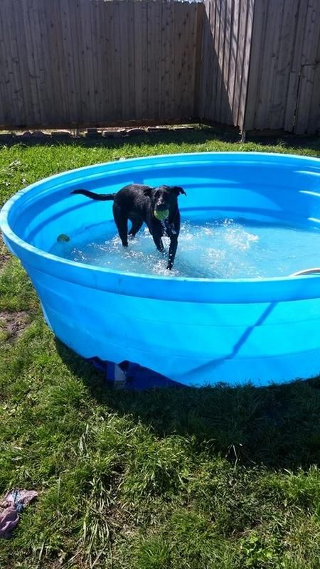 Our dog loves our big 8-foot stock tank pool! Best way to cool off ...
