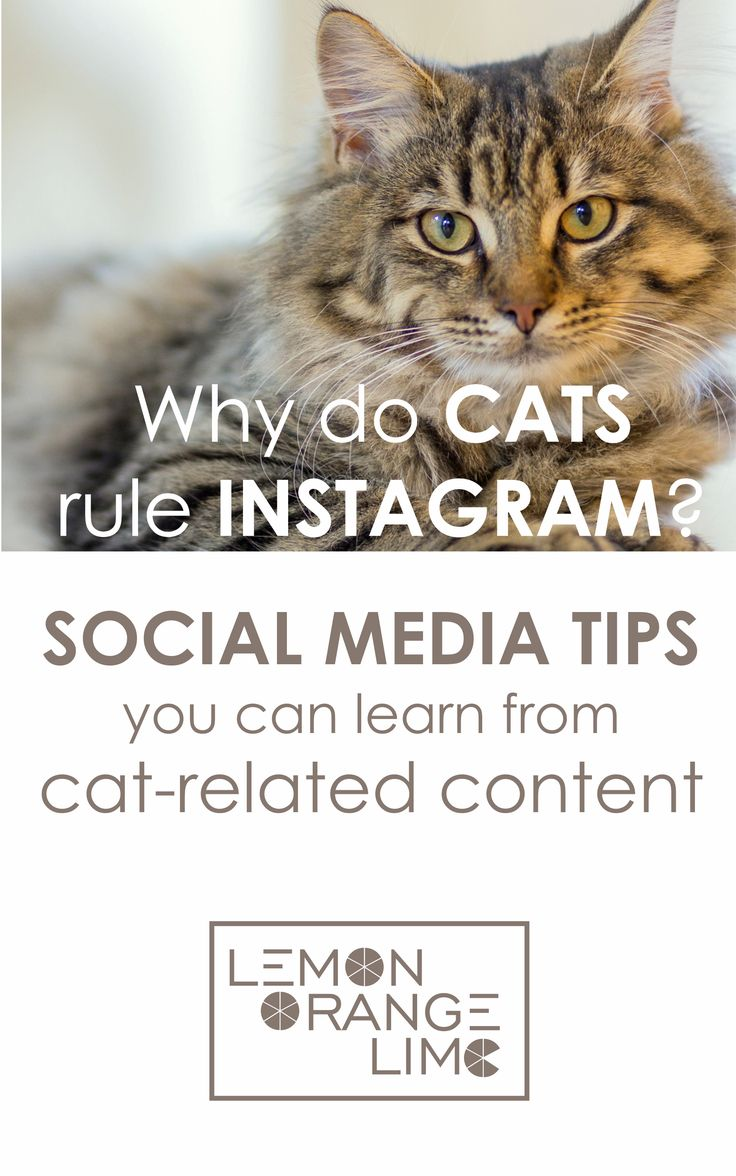 Social Media Tips you can learn from cat-related content - improve your social media marketing! Read the article: http://lemonorangelime.com/motivating-stuff/cats-rule-internet-social-media-tips/