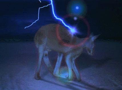 le kangourou électrique annonce une vigilance orage sur la France