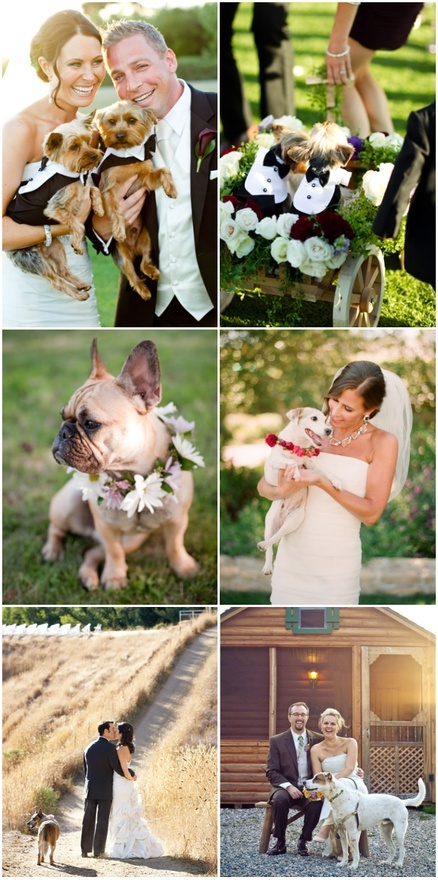 Wedding dogs. I died when I saw the little dogs in the wagon lol