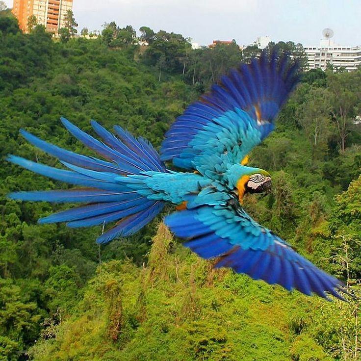 Feliz sábado! Fotografía cortesía de @mabelcornago #LaCuadraU #GaleriaLCU #Caracas #Macaws #Guacamayas #Nature #Naturaleza