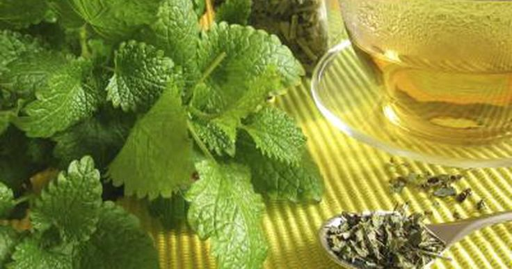 """Lemon balm, or """"Melissa officinalis,"""" is an herb belonging to the mint family that's been used for centuries to treat anxiety, sleep disorders, indigestion and wounds. You can make lemon balm tea by steeping 1/4 to 1 tsp. of dried herb in hot water. You can drink the tea up to four times daily. You can also make topical..."""