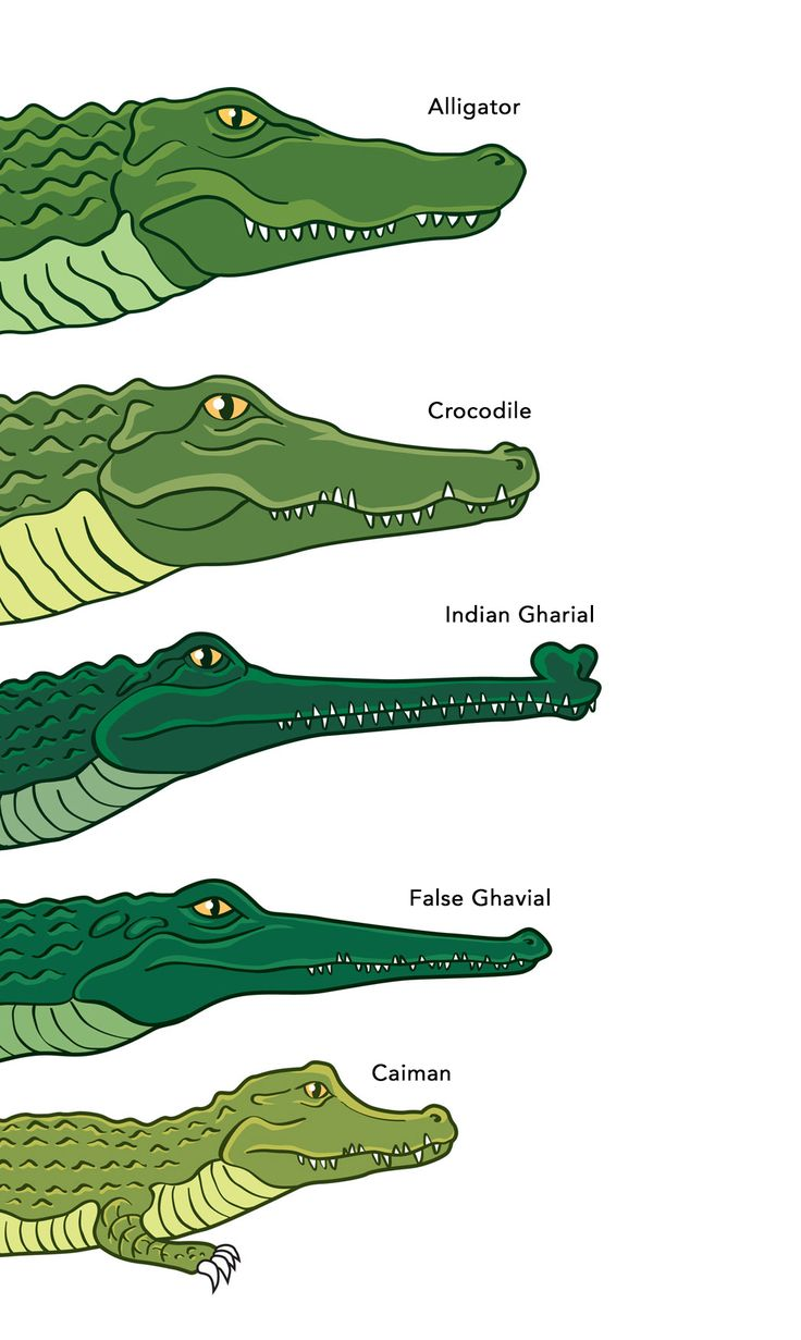 Identifying Crocodiles