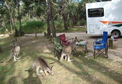 אין ספק שאוסטרליה היא בין היעדים היפים ביותר בעולם. היא מציעה מגוון של נופים, פארקים לאומיים, בעלי חיים מקסימים שרק שם תוכלו למצוא ועוד ועוד. אם אתם מתכננים טיול משפחתי לשם בקראוון, לא תתאכזבו. עם שלל החוויות שתצברו ודאי יום יום, סביר שעוד לפני תום המסע, תתכננו את הביקור הבא שלכם בה...