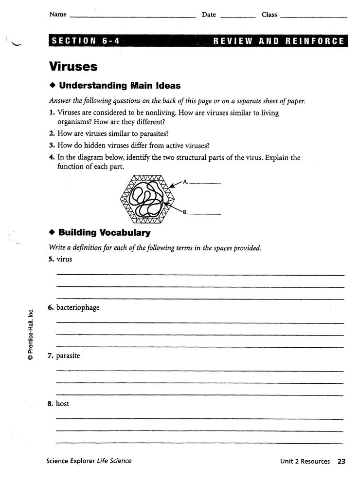 Printables Bacteria Worksheet 1000 images about biology on pinterest worksheets bacteria and viruses worksheet laurenpsyk free 7 red team download