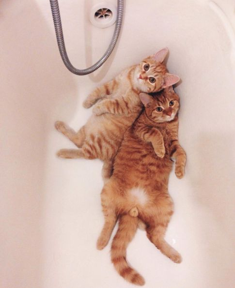 "catsbeaversandducks: """"Let's be cute together!"" Photos by ©Anya Yukhtina """