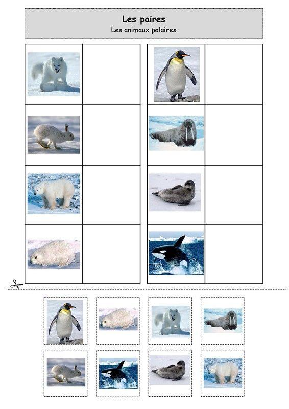 Les paires : les animaux polaires. Chez Nounou Lolo 88.