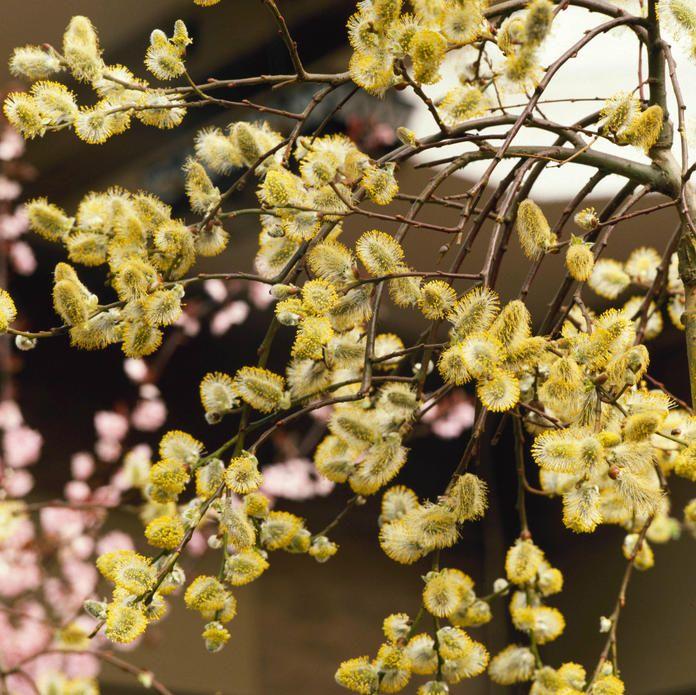 Die 10 Schonsten Heimischen Geholze Fur Den Garten Heimisch Garten Pflanzen