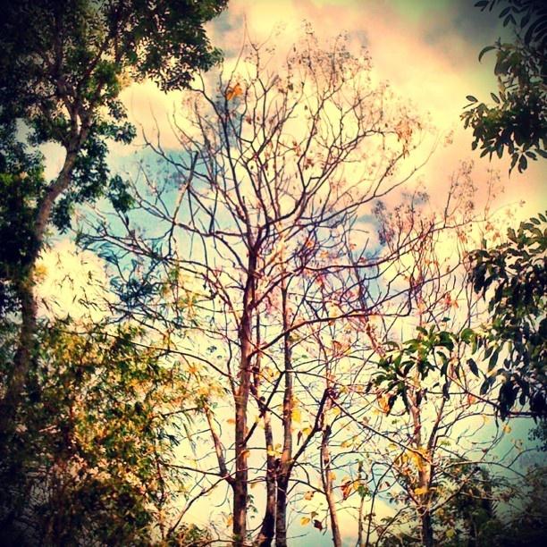 The Branch #monstagram @dwymonster on #instagram